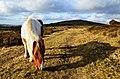 Dartmoor (5512557651).jpg