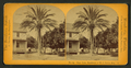 Date palm, residence of M.J. Brown, Esq, from Robert N. Dennis collection of stereoscopic views.png