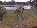 De Maasduinen - panoramio.jpg