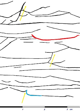 Dish structure - Sketched dish structure from the Jack Fork Group. Nearly perfect dish in red, water escape indicated by yellow arrows. Upturned edge of a dish in blue.