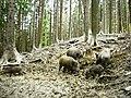 Divé svine vo Vrátnej - panoramio.jpg