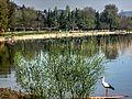 Dojran Lake 250.jpg