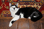 Domestic cat 2011 G02.jpg