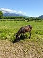 Donkey @ Saint-Jorioz (50487729538).jpg
