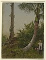 Drawing, Trees in Jamaica, West Indies, 1865 (CH 18201249).jpg