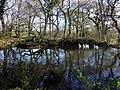 Duck pond at Rinaston - geograph.org.uk - 619278.jpg