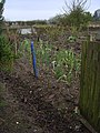 Dunken Hill Allotments - geograph.org.uk - 761381.jpg