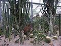 Duthie Park - cacti.jpg