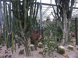 Duthie Park - Image: Duthie Park cacti