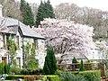 Easter floral display in Caernarfon Road - geograph.org.uk - 393413.jpg