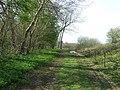 Edge of Tuttles wood - geograph.org.uk - 771406.jpg