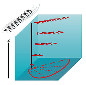 Ekman layer - The Ekman layer is the layer in a fluid where the flow is the result of a balance between pressure gradient, Coriolis and turbulent drag forces. In the picture above, the wind blowing North creates a surface stress and a resulting Ekman spiral is found below it in the column of water.