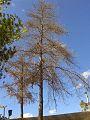 El árbol viejo.jpg