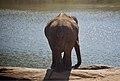Elephant Bannerghatta.jpg