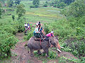 Elephant ride in Chiang Rai Province 2007-05 4.JPG