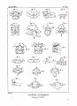 Encyclopédie méthodique - Systeme Anatomique, Pl11.png