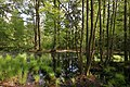 Erlenbruch Langwiesenholz 03.jpg