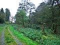 Erlestoke Park Woods footpath - geograph.org.uk - 729296.jpg