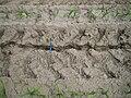 Erosion Verdichtung017.jpg
