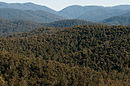 Errinundra National Park 2010.jpg