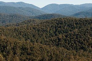 Errinundra National Park - Errinundra National Park