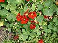 Especie de flora endémica en Parque Ecológico de Xochimilco 002.JPG