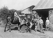 blacksmith filing a horse's hoof while several evacuee boys and another horse look on in 1940