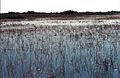 Everglades54(js).jpg