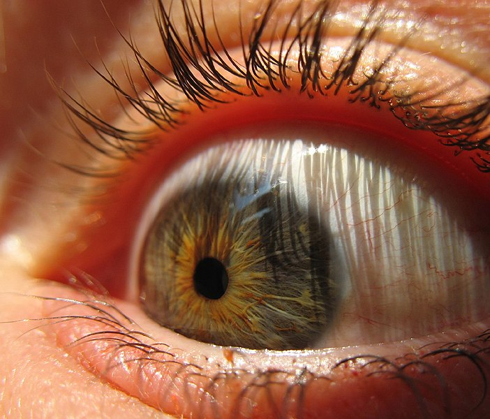 Archivo:Eyeball (sugarpond).jpg