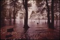 FLOOD WATERS OF THE ILLINOIS RIVER AT COOPER PARK, EAST PEORIA - NARA - 552440.tif
