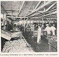 FMIB 45004 Cleaning Sardines in a Southern California Fish Cannery.jpeg