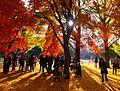 Falinyoyogipark-nov30-2014.jpg