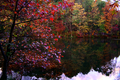 Fall-trees-winecellar-lake - West Virginia - ForestWander.png