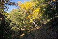 Fall Colors on the Webster Trail - panoramio.jpg