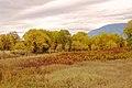 Fall Colour - panoramio.jpg