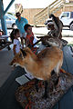 Families explore, learn about animals on base 120620-M-GL246-002.jpg