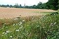 Farmland approaching Mortimer - geograph.org.uk - 1394069.jpg