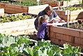 Father shows daughter the bean sprouts growing in the raised beds (5808624919).jpg