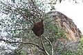 Fauna do Parque Nacional Serra da Capivara (9505).jpg