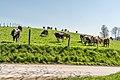 Feldkirchen Dietrichstein Rinder auf der Weide 19042018 2998.jpg