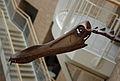 Fernbank Museum - Atlanta - Flickr - hyku (19).jpg