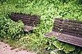 Ffm Niddapark Sitzbänke unter Brennnesseln.jpg