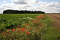 Field boundary near Feltwell - geograph.org.uk - 1438619.jpg