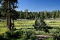 Field by Deer Creek Cabin-Malheur (23304991753).jpg