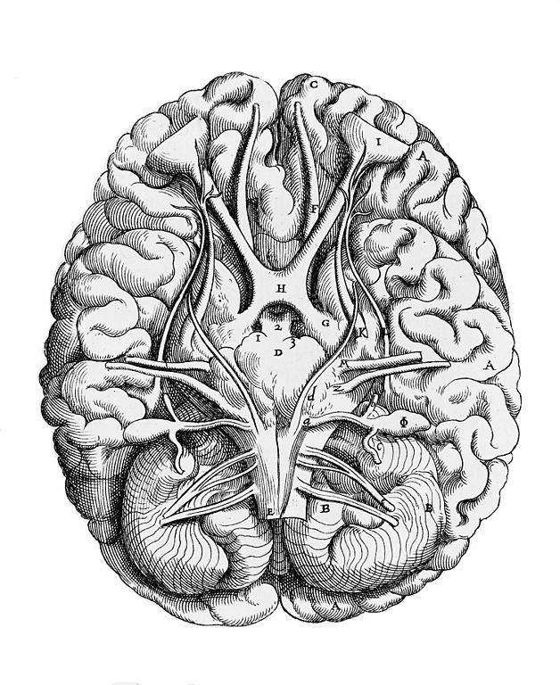 This is a picture of Irresistible Brain Line Drawing