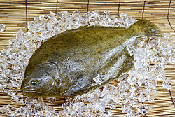 Flatfish-lefteyed-flounder.jpg