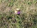 Fleur collante (2).JPG