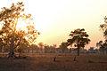 Flickr - ggallice - Sunset, South Luangwa bush.jpg