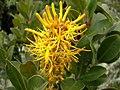 Flora Parque Nacional Manu 08.jpg