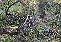 Flora and fauna of in Chinnar WLS Kerala IMG 6417.jpg